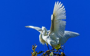 Picture the sky, bird, wings, uluv