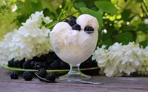 Picture berries, ice cream, BlackBerry, sweet, hydrangea