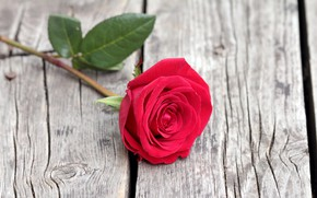 Picture Board, rose, red rose, the gap