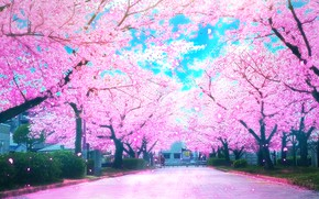 Picture road, spring, Sakura