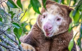 Picture Animals, kangaroo, steeplejack