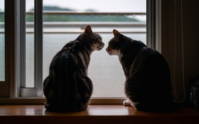 Picture cat, cat, light, cats, cats, window, pair, sill, silhouettes, two, communication, two cats