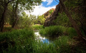 Picture greens, forest, the sky, grass, water, the sun, clouds, trees, stones, reed