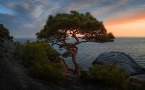 Wallpaper sea, the sky, clouds, landscape, branches, stones, tree, rocks, shore, the evening, slope, horizon, needles, ...