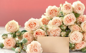 Picture flowers, roses, buds, beautiful