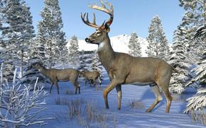 Picture winter, snow, deer