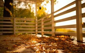 Picture autumn, the sun, foliage, weather, terrace