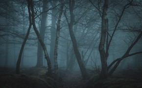 Picture forest, trees, nature, fog, twilight