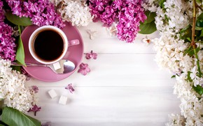 Picture coffee, Cup, lilac, Still life
