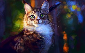 Picture cat, Maine Coon, by Meorow