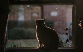 Picture cat, cat, back, window, sill, sitting, blinds