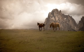 Picture field, mountains, rocks, two, horses, horse, pair, two horses, two knights