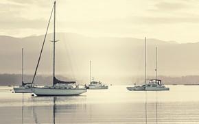 Picture sea, fog, coast, yachts, morning, mast