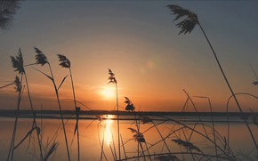 Picture sunset, river, plants, the evening, Bank, warm colors, reeds blowing in the wind, panoramic footage