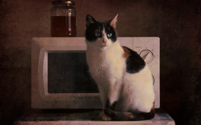Picture cat, cat, look, background, treatment, kitchen, Bank, oven, still life, sitting, spotted, microwave, retro style, …