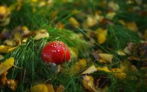Picture forest, grass, mushroom, mushroom