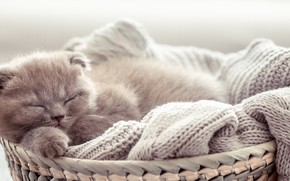 Picture kitty, baby, sleeping, basket