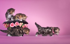 Picture flowers, mood, hat, kittens, kids, pink background