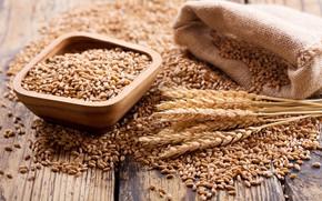 Picture Ears, Bowl, Grain, Placer, Pouch
