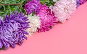 Picture pink, bouquet, violet, asters