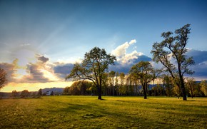Picture trees, sunset, Austria, meadow, Austria, The most results, Engerwitzdorf