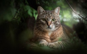 Wallpaper greens, cat, look, portrait, muzzle, cat