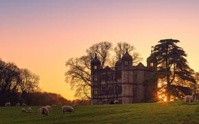 Picture castle, sheep, pasture