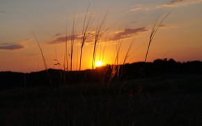 Picture field, sunset, nature, the steppe, plant, silhouette