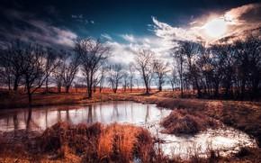 Picture autumn, trees, nature, lake