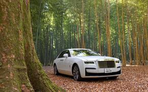 Picture forest, white, nature, Rolls-Royce, Rolls-Royce Ghost