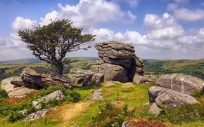 Picture stones, tree, England, Dartmoor