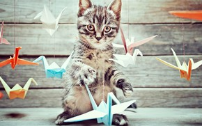 Wallpaper background, Board, birds, kitty, origami, bokeh