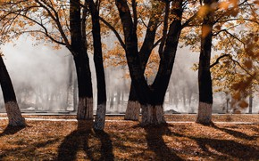 Picture autumn, leaves, light, trees, branches, nature, fog, Park, mood, trunks, foliage, shadows, alley, falling leaves, …