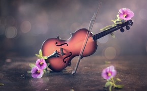 Picture flowers, background, violin