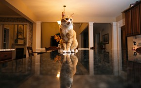 Picture cat, table, room, red