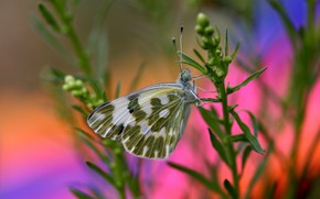 Picture butterfly, plant, bokeh