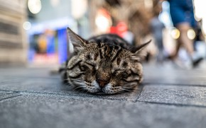Picture cat, stay, street, sleeping, Kota