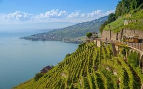 Picture lake, Switzerland, Alps, the vineyards, Laveau