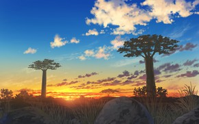 Picture landscape, sunset, nature, baobabs