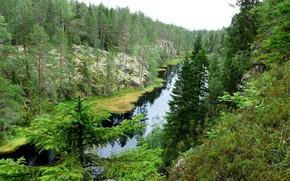 Picture river, tree, taiga