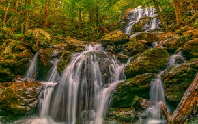 Picture forest, trees, stones, waterfall, cascade