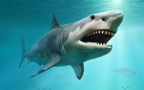 Picture shark, teeth, proportions