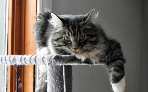 Picture on the stand, tabby cat, looking at the camera