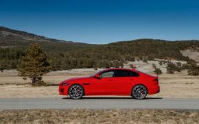 Picture road, red, tree, Jaguar, side view, 2020, Jaguar XE
