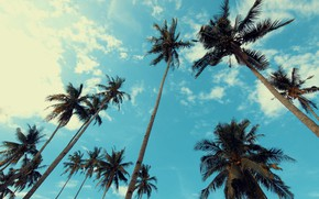 Picture the sky, clouds, trees, palm trees, the top