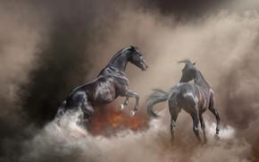 Wallpaper nature, pose, fog, background, fire, fire, horse, horse, smoke, stallion, horses, treatment, horse, pair, couples, ...