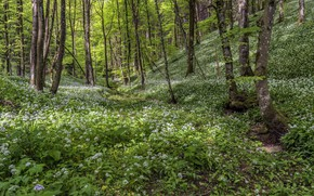 Picture forest, flowers, glade
