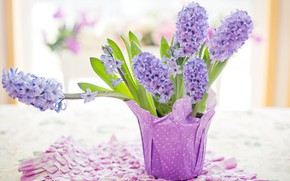 Picture purple, nature, spring, pastel, hyacinth