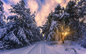 Picture winter, forest, the sun, rays, snow, frost, pine, Aleksei Malygin