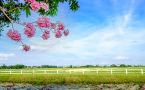 Picture field, grass, trees, branches, river, spring, flowering, landscape, pink, blossom, beautiful, tree, spring, bloom